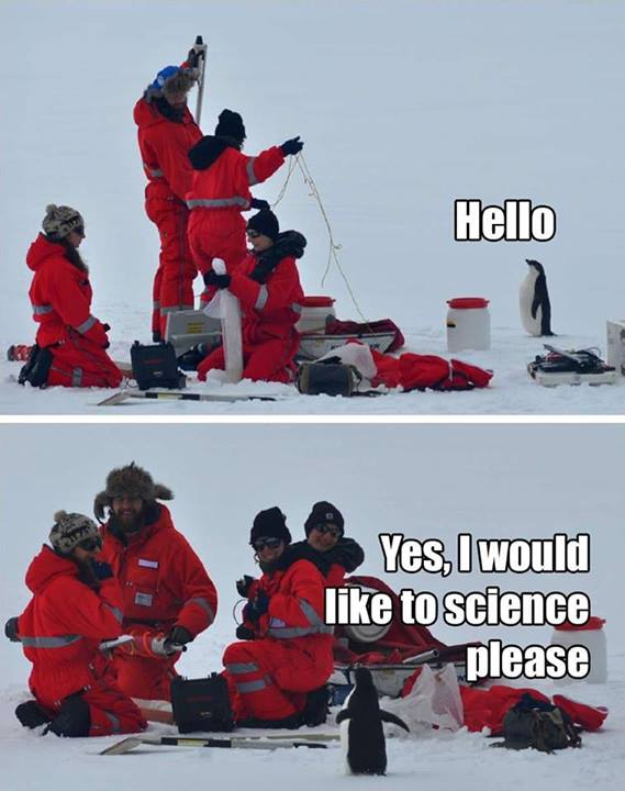 But first I will teach you how to penguin.